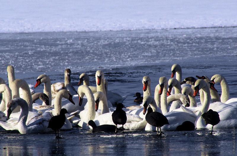 Top 5 aktivnosti za ljubitelje prirode u Srijemu 2 LEKT_2
